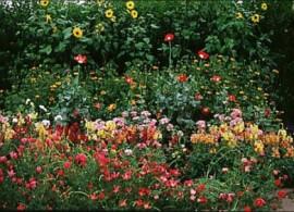 Flower Garden Fragrance